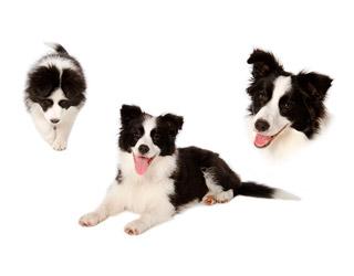 Hos fotografen Collage af hund